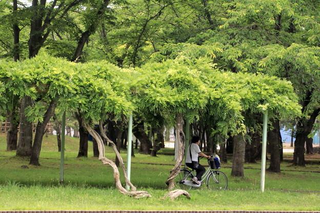 Photos: 合浦公園・自転車01-12.07.04