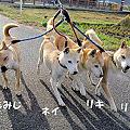 写真: 散歩_08701