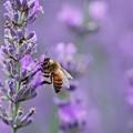 Photos: Love bee tender,  love bee sweet.