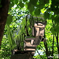 Photos: 緑蔭の季節