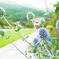 Photos: 20110730_160628