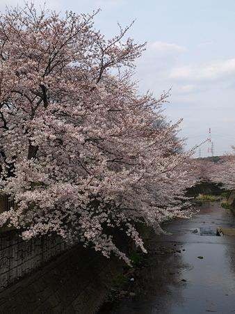 恩田川31