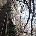 写真: 地元の桜だいぶ咲いてる!お...