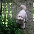 写真: 101031 くーかい of the day 1