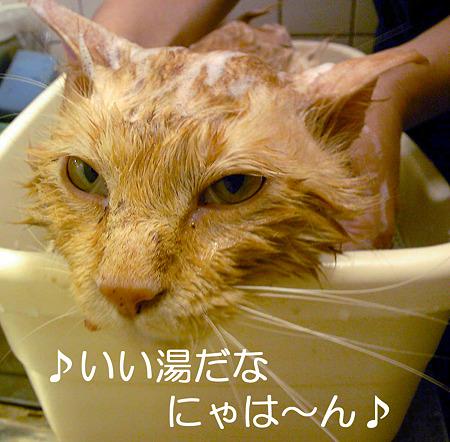 ♪いい湯だなにゃは~ん♪