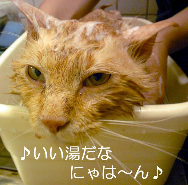 Photos: ♪いい湯だなにゃは~ん♪