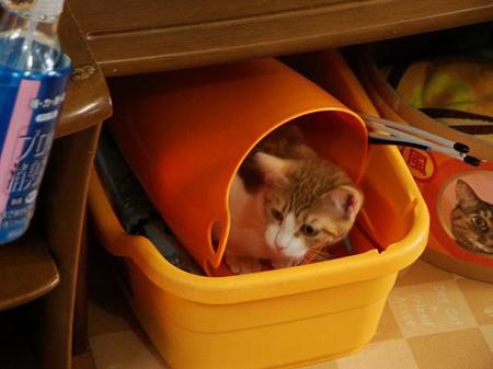 ドリア「うまく隠れたわ」