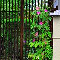 Photos: 日本の夏 ♪