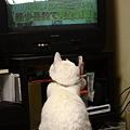 写真: テレビ観てます
