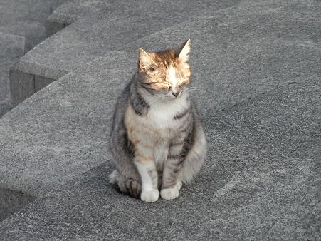 野良猫 散歩道 (3)