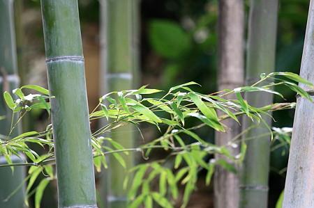 2010.09.29 和泉川 竹