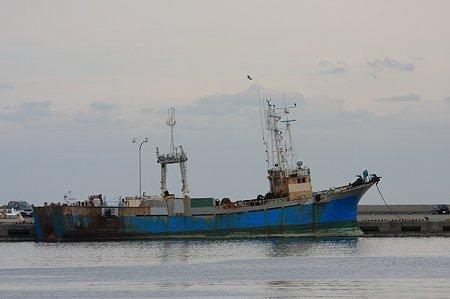 2010.10.28 八戸漁港 船とウミネコ