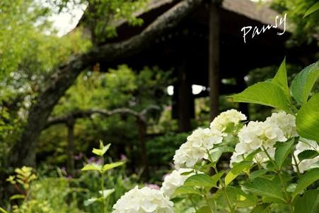 風待月の東慶寺・・5