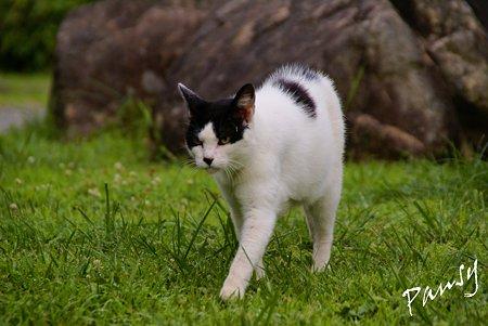 夏の日の猫・・1