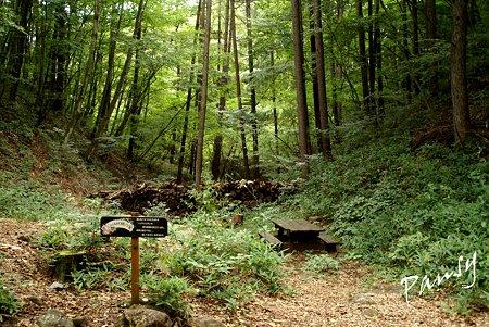 森のなかの妖精の家・・2
