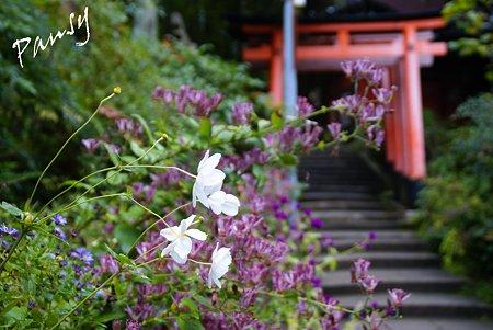京都 伏見稲荷大社・・18