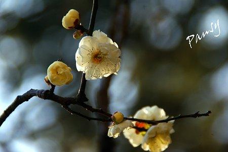 早春の東慶寺にて・・4