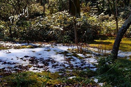 1日限りの残雪・・早春の東慶寺にて・・5