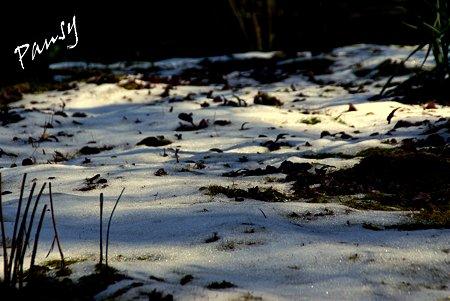 雪の残る庭・・早春の東慶寺にて・・6