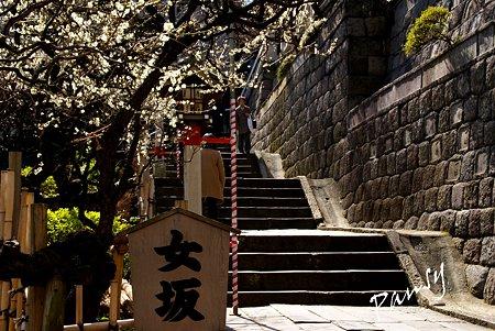 梅咲く・・湯島天神・・18
