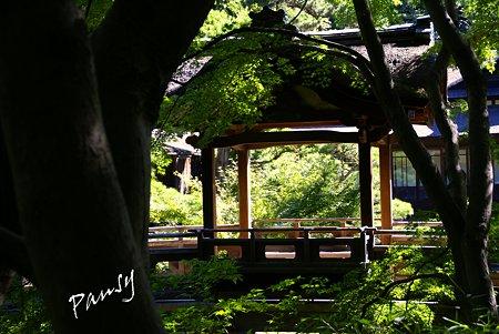 夏の三渓園内苑・・7