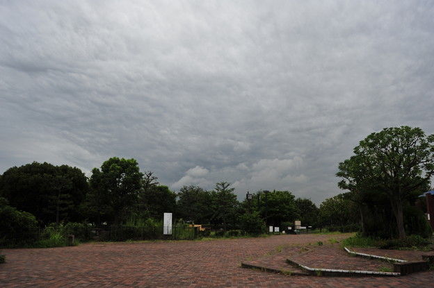 Photos: ザラザラした曇天