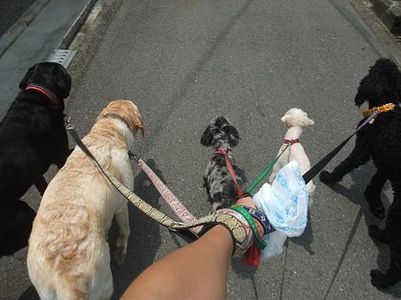 みんなで最後のお散歩