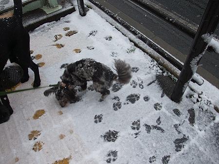 雪の中の足跡っていいね♪