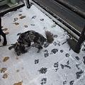 Photos: 雪の中の足跡っていいね♪