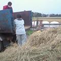 Photos: 脱穀'09 (14)
