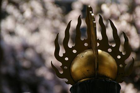 燈篭と枝垂桜(110402)
