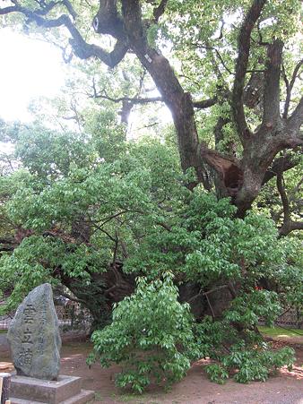 浜松八幡宮 - 03