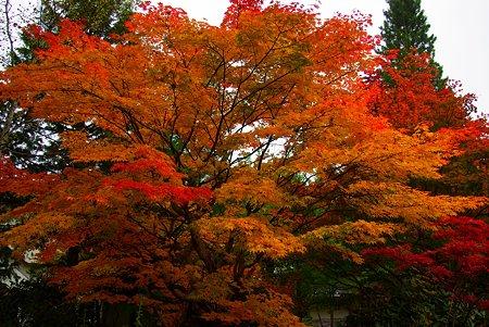 開田高原のホテルの樹