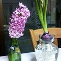 Photos: 昨日満開の花を切って花瓶に...