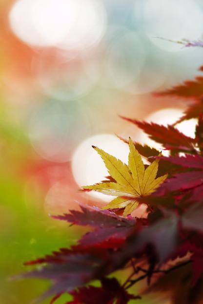 朝の葉っぱ