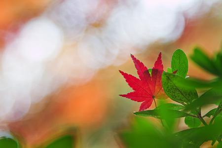 秋空に願いを