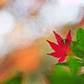 Photos: 秋空に願いを