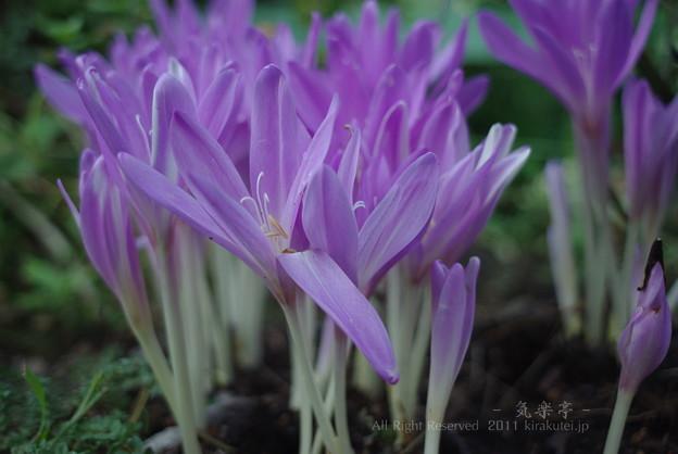写真: この花なんて名前(滝汗