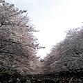 写真: 上さくら下ひとひとひとひとの上野公園
