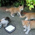 写真: 子猫たち、元気でした☆
