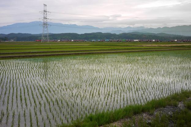 「水田」の画像検索結果