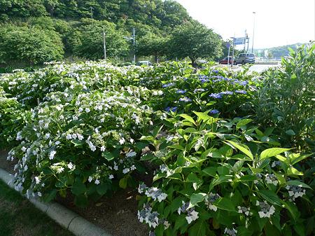 道の駅 豊前おこしかけ(3)
