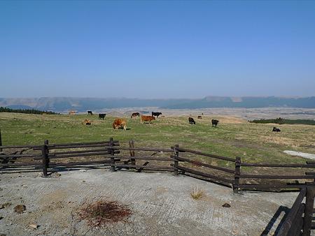 阿蘇の放牧風景(7)阿蘇市と外輪山を見ながら