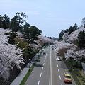 Photos: 兼六園下の桜並木