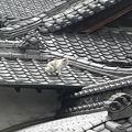 屋根に猫1
