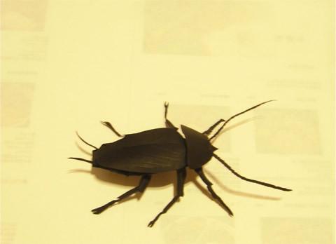ゴキブリ!ペパクラです