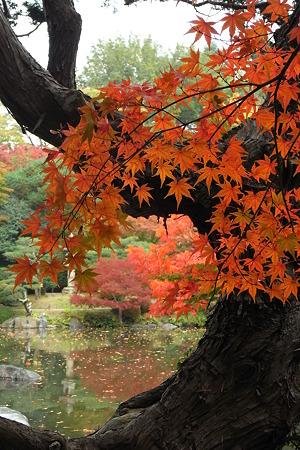 紅降る木陰
