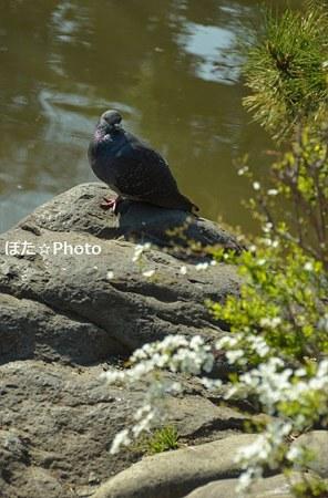 鳩も絵になる有栖川公園