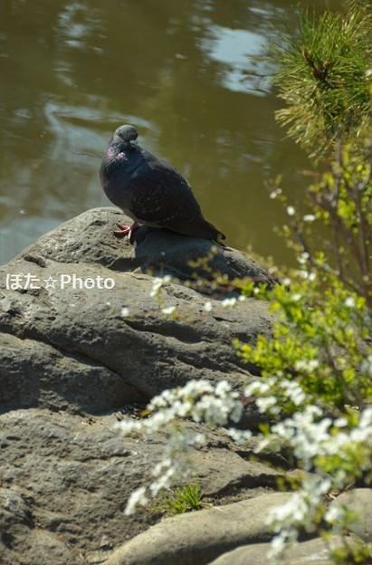 Photos: 鳩も絵になる有栖川公園
