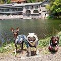写真: 金鱗湖にて
